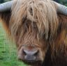 HairyCoo profilkép